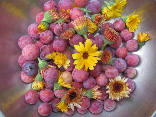 Wild plums and Calendula