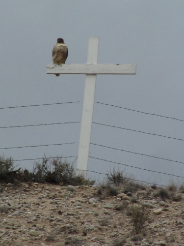 Golden Eagle on a cross overlooking Chimayo, NM