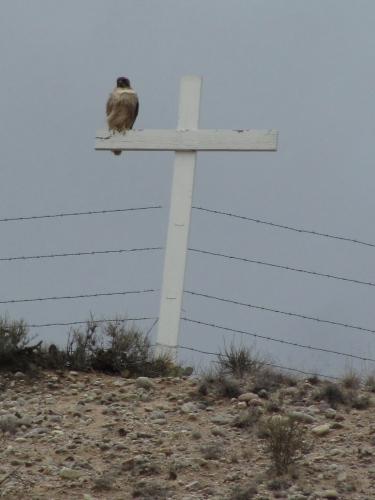 Golden Eagle on a cross overlooking Chimayo, NM